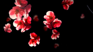 Blütenpopcorn